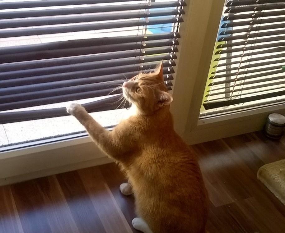 kočka a vnitřní žaluzie